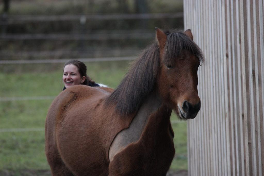 Krauleinheiten stärken die Pferd-Mensch-Beziehung
