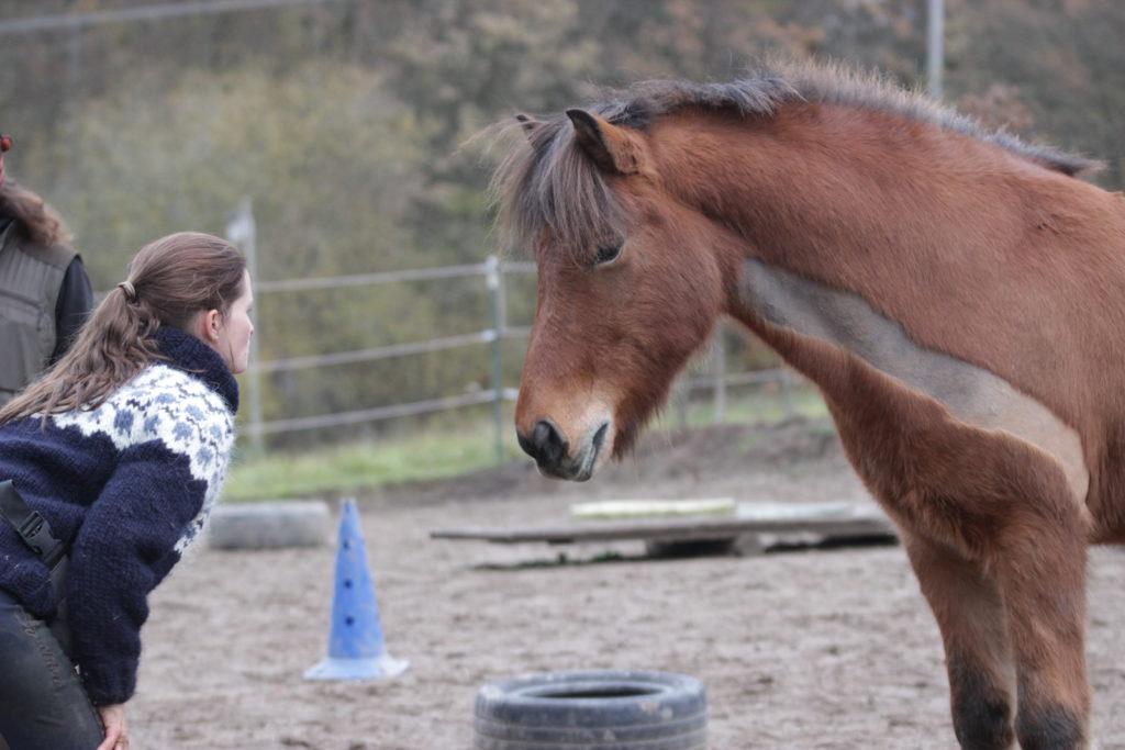 Pferd-Mensch-Beziehung auf Augenhöhe